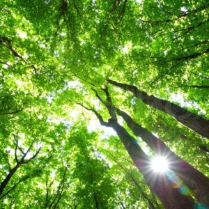 Bliv grønnere produkter kommer snart